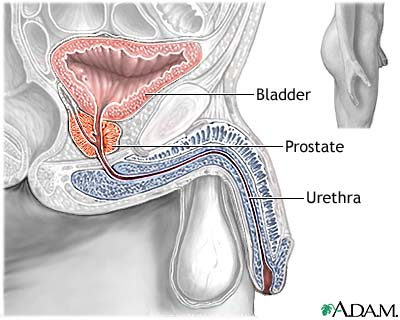 enlarged prostate | uf health, university of florida health, Cephalic Vein