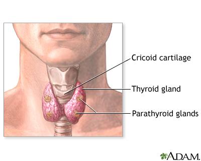 Parathyroid Gland Removal Uf Health University Of Florida Health