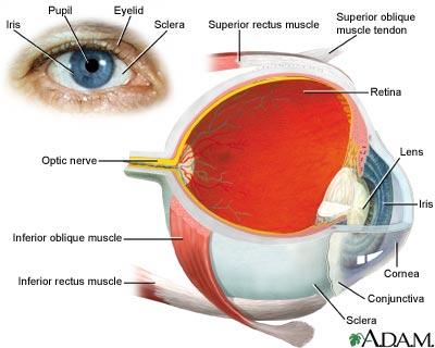 glaucoma | uf health, university of florida health, Cephalic Vein