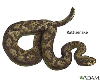 Snake bites | UF Health, University of Florida Health