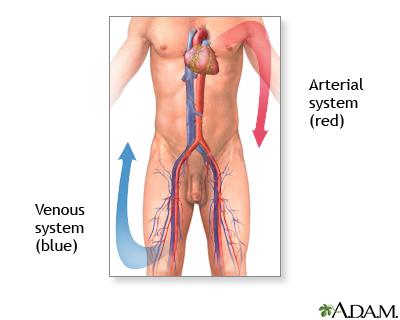deep vein thrombosis  uf health university of florida health