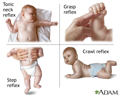 infant reflexes A list of reflexes in humans abdominal reflex accommodation reflex — coordinated changes in the vergence, lens near object acoustic reflex or attenuation reflex — contraction of the stapedius and tensor tympani muscles in the middle ear in response to high sound intensities.