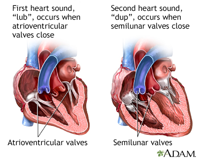 heart palpitations | uf health, university of florida health, Skeleton