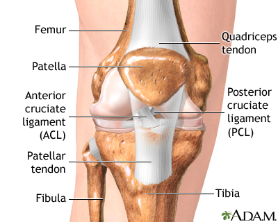 anterior cruciate ligament (acl) injury | uf health, university of, Human Body