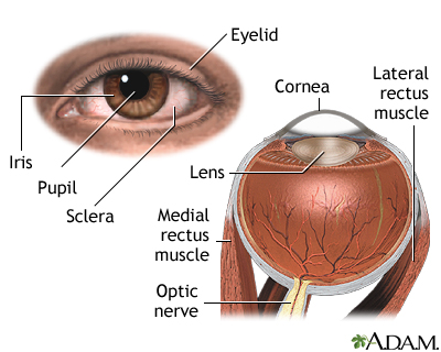 Vision - night blindness | UF Health, University of Florida Health