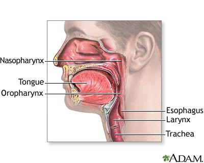 Throat Or Larynx Cancer Uf Health University Of Florida Health