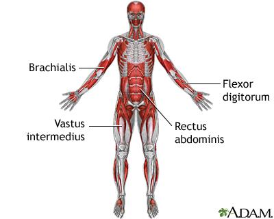 muscle twitching | uf health, university of florida health, Skeleton