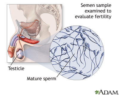 Can you injure sperm
