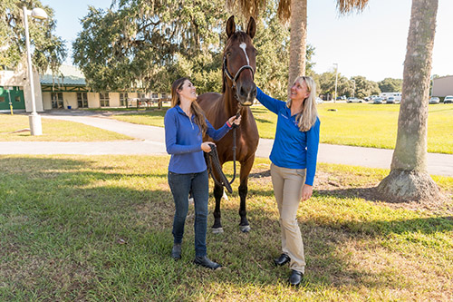 Casino Royale, a Warmblood dressage competitor treated at UF in 2016 and 2017, is shown with his owner, Danielle Ammeson, and Dr. Allison Morton, a UF equine surgeon, outside of the Alec P. and Louise H. Courtelis Equine Hospital on Oct. 14. (Courtesy of Danielle Ammeson)