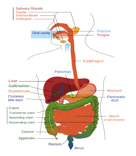 About GI Cancer | UF Health Gastrointestinal Oncology Center