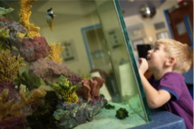 Child looking at aquarium in the UF Health Children's Surgical Center