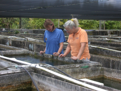Dr. Ruth Francis-Floyd, right, is shown with Tamela Biro of Florida Exotic Fish Sales, a family-run fish farm in Homestead that produces African cichlids for the ornamental trade. (File photo)