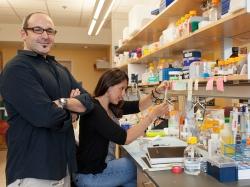 Martin J. Cohn, Ph.D., and Ana M. Herrera in the lab.
