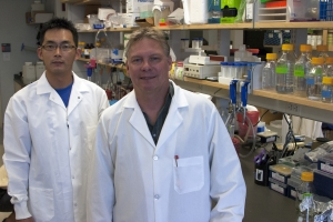 Hong Seok Choi and Rolf Renne, Ph.D., were co-authors on a study that pinpointed how dormant herpes viruses reactivate and cause disease long after initial infection.