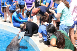 Participants in the UF College of Veterinary Medicine's Seavet course traveled to Sea World Orlando to see how professionals work with underwater creatures.