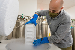 Matthew Schaller, Ph.D., removes a container of cryopreserved lung tissue from an ultra-cold freezer in his laboratory. (Photo by Louis Brems)