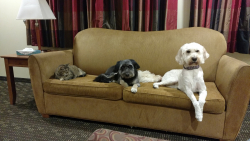Cello, far right, is shown at home with her animal family members in this photo provided by her owner, Joan Garbutt.