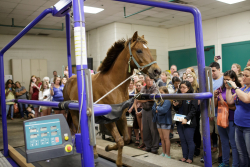 Attendees of the 2018 Open House at UF's College of Veterinary Medicine watch a horse racing on a treadmill during a demonstration. Horse treadmill demonstrations will also be featured during this year's event on April 13. (Photo by Mindy Miller)
