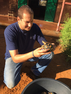 Justin Rosenberg, D.V.M., examines a rescued radiated tortoise being rehabilitated in Madagascar.