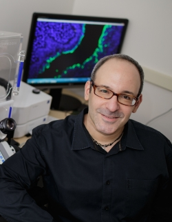 Martin J. Cohn, Ph.D., is a professor of molecular genetics and microbiology in the UF College of Medicine and a member of the UF Genetics Institute.