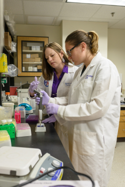 Lauren Douma, Ph.D., right, a postdoctoral fellow, works in the laboratory of Michelle Gumz, Ph.D., left, an associate professor in the UF College of Medicine's division of nephrology, hypertension and renal transplantation.