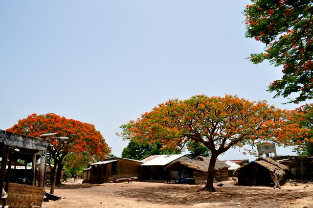 A village near Kedougou, Senegal where Dr. Derek Cummings conducts field studies of sylvatic arboviruses.