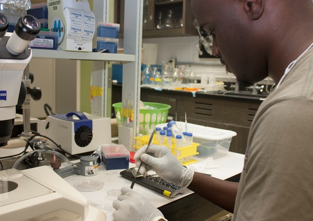 Genetics and Genomics graduate student Keon Wimberly conducts research in the lab of Keith Choe