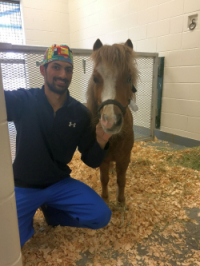 Rico, a 3-year-old miniature horse, is shown with Dr. Andrew McClain, a large animal surgery resident, at the time of Rico's surgery in April 2017. (Photo courtesy of Dr. Taralyn McCarrel)