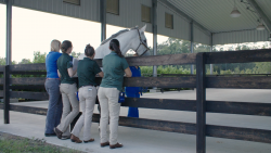 Dr. Ali Morton, far left, stands with three veterinary students in the UF Equine Sports Medicine Performance Arena while they study the gait of a horse. A new teaching consortium spearheaded by the UF College of Veterinary Medicine will focus on sharing best practices to improve teaching in academic veterinary medicine. (File photo)
