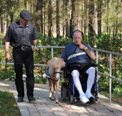 John LeCain, a 66-year-old pastor from Palenville, N.Y., is a patient at Shands Rehab Hospital and worked with a horse named Hamlet to complete his therapy. He strolls outdoors with Hamlet and Jorge Garcia-Bengochea, executive director and co-founder of Gentle Carousel Miniature Therapy Horses.