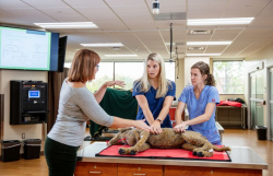 Dr. Bobbie Conner instructs two UF veterinary medical students on how to conduct CPR on a dog in the College of Veterinary Medicine's new clinical skills laboratory, part of a building addition recently completed. (File photo)