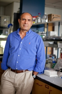 Mansour Mohamadzadeh, Ph.D., a professor in the UF College of Veterinary Medicine and the UF College of Medicine, studies a genetically-modified form of the bacterium Lactobacillus acidophilus that greatly reduced abnormal gut inflammation and reversed colon cancer in mice. (Photo by Maria Farias)