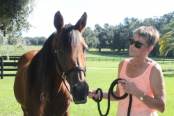 Tsensation, a 25-year-old Arabian gelding, is shown with his owner, Rae Marie Smith, at her farm in Ocala. Tsensation is one of 35 horses that were treated successfully for a challenging form of colic through the use of a technique developed by UF equine surgeons.  (Photo by Sarah Carey) Click image for high res download.