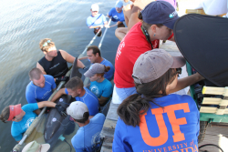Members of the Dolphin Research Center staff gently hold a 26-year-old male dolphin named A.J. while his hearing test is conducted with assistance from Dr. Megan Strobel, front right. (Photo by Lauren Harris, Dolphin Research Center, Grassy Key, Florida)
