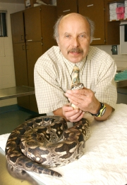 Dr. Elliott Jacobson is shown with a Dumeril's ground boa, a snake species affected by inclusion body disease.