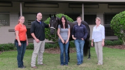 Gracie, a horse that received a rare surgical procedure at UF to treat a broken shoulder, is shown Nov. 21 at the Sanctuary Equine Sports Therapy and Rehabilitation Center in Ocala, Fla., with Erin Shaffer, a therapy technician with the Sanctuary; Dr. Andrew Smith from UF; Gracie's owner, Carol Norton; Dr. Sarah Graham from UF and Brenda McDuffey, general manager at the Sanctuary. (Photo courtesy of The Sanctuary Equine Sports Therapy and Rehabilitation Center)