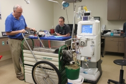 Dr. Rob MacKay, a professor of large animal medicine, and Dr. Carsten Bandt, an assistant professor of emergency and critical care, monitor Brutus, a 1-year-old zebu, during hemodialysis treatment at UF Veterinary Hospitals.