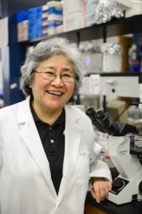 Janet Yamamoto, Ph.D., a professor of retroviral immunology at the UF College of Veterinary Medicine