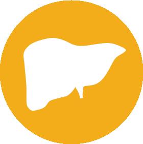 Liver transplant icon