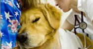 Veterinary Diagnostic Labs