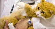 Small Animal Veterinary Hospital