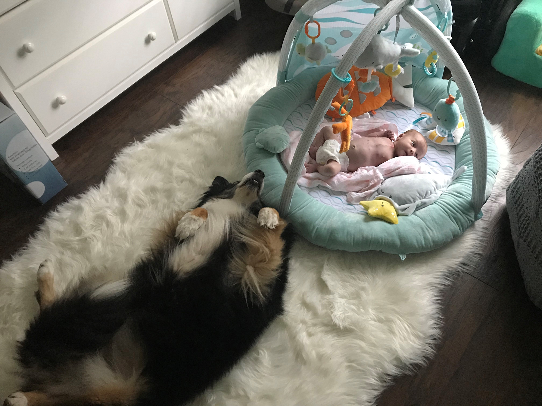 Riley is at home with her furry brother and sister, Brody and Stella. The Australian shepherds stay by her side as she grows stronger each day.