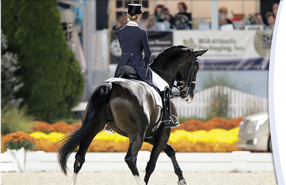 World-class dressage horse back in competition after successful treatment at UF
