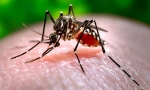 Q&A about the Zika virus