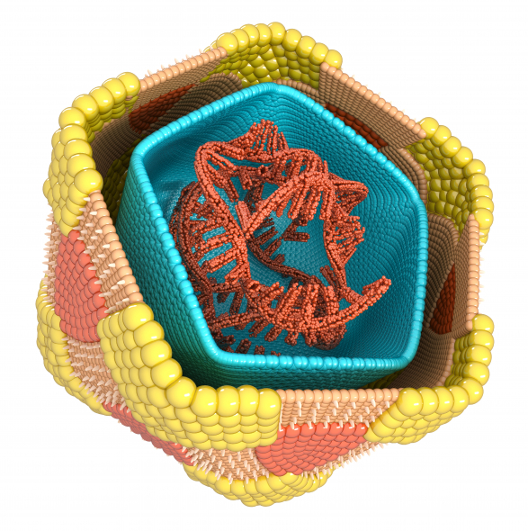 coxsackievirus