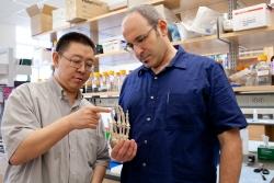 Zhengui Zheng, Ph.D., and Martin Cohn, Ph.D.