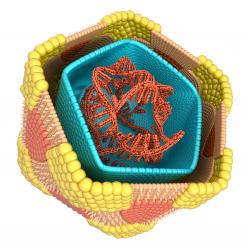 Coxsackievirus Image