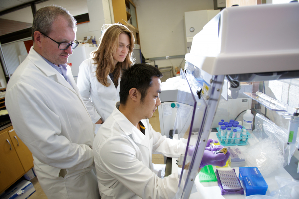 UF researchers link brain regulation of immune system responses to changes in gut microbiota