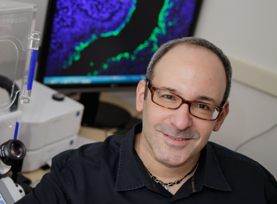 Researchers identify genes connecting endocrine disruption to genital malformations